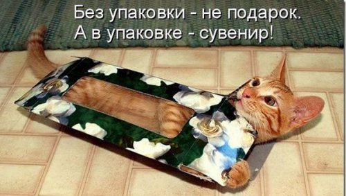 Потрясная котоматрица (30 фото)