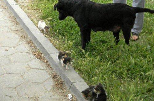 Мама для котят (9 фото)