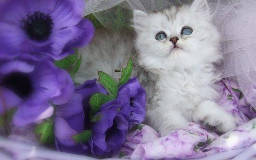 Милые красавчики (31 фото)