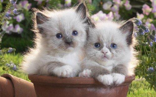 Очаровательная фотосессия собак и кошек (31 фото)
