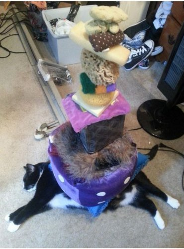Сколько барахла вместится на одной ленивой кошке (9 фото)
