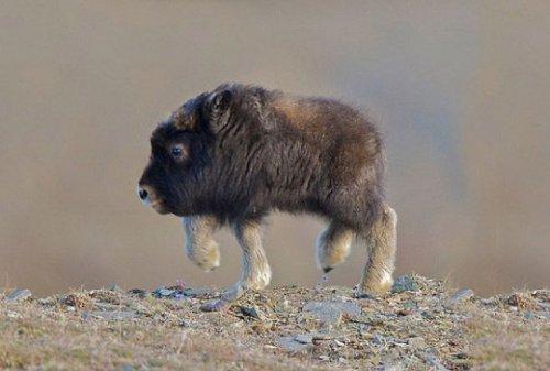 Юмор : Если бы у земных животных не было шеи (16 фото)
