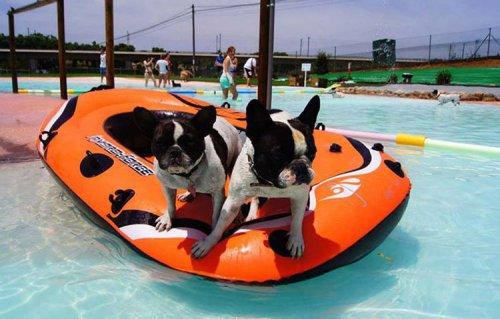 В Испании открылся курорт для собак