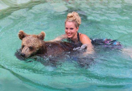 Лев, тигр и медведь гризли плавают вместе (16 фото)