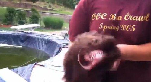 Юмор : Забавный пёс и пылесос