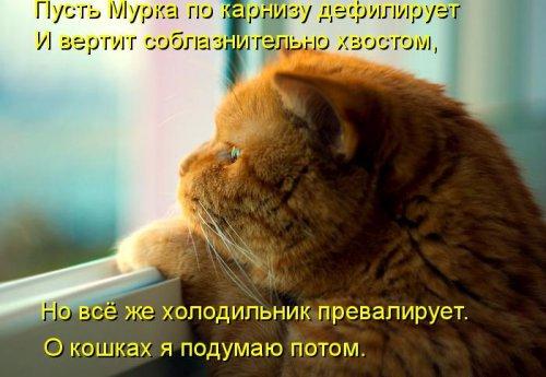 Чудесные котоматрицы (30 фото)