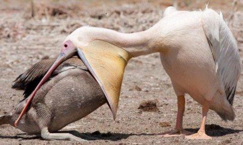 Эти очаровательные животные (40 фото)