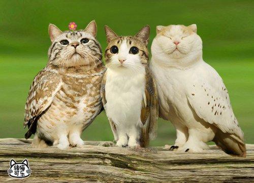 Юмор: Суперпопулярный гибрид совы и кошки (10 фото)