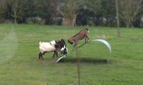 Юмор : Животные умеют веселиться!