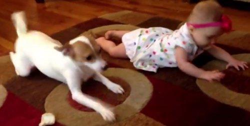 Пёс учит малышку ползать