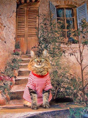Кот-модель на фотографиях Джоан Бионди (12 фото)