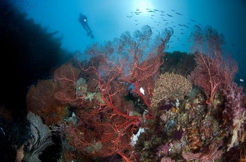 Жизнь океана в подводной фотографии Энди Лернера (25 фото)