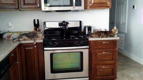 Собаки и кошки в одной обложке (40 фото)