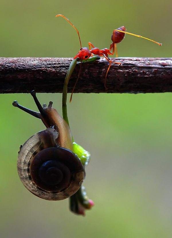 Прикольные картинки про муравьев, виде сердца