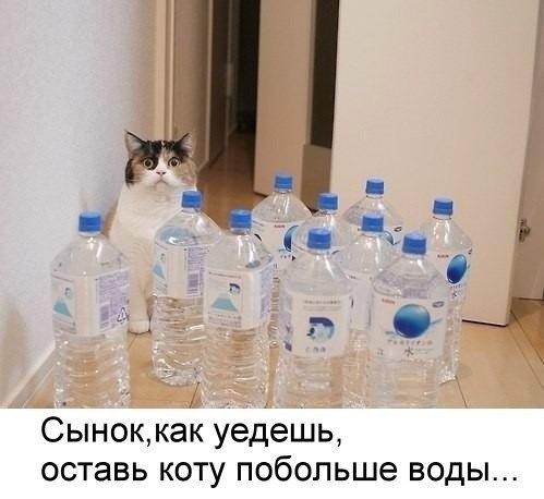 Сплошной позитив от кошек и собак (30 фото)