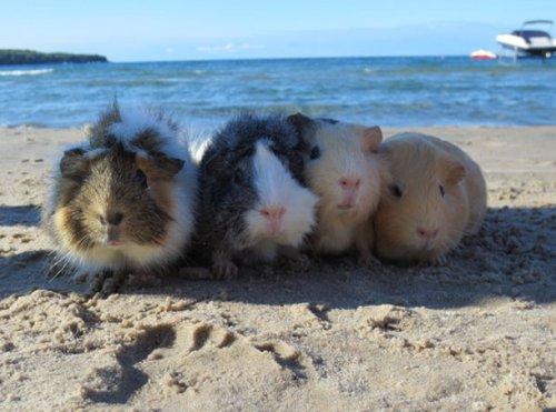 Животные на пляже (22 фото)