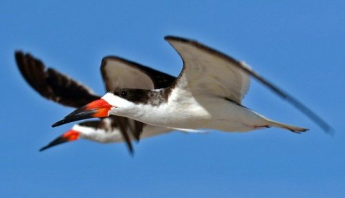 Птицы с самыми необычными клювами (10 фото)