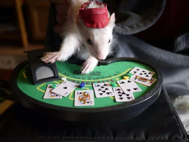 foti-prikoli-kazino