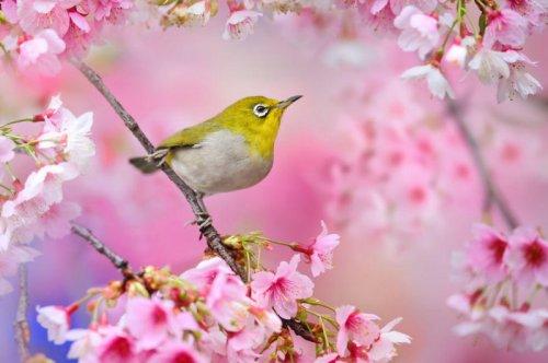 Красивые фотографии птиц Сью Хсу (12 фото)