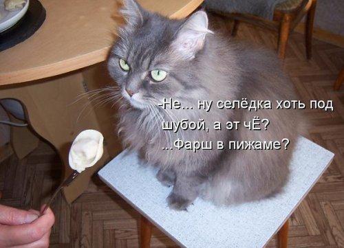 Ох уж эти кошки! (40 фото)