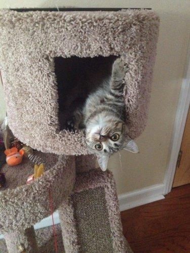 Кот остался один дома