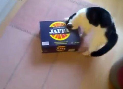 Юмор : Самоупаковка кошки