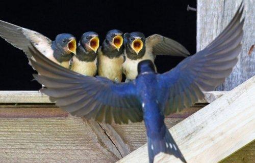 Птичий хор на распевке (6 фото)