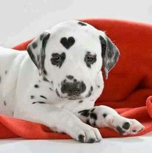 Собачий позитив (20 фото)