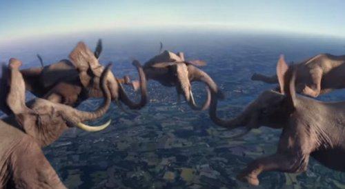Слоны в свободном полете