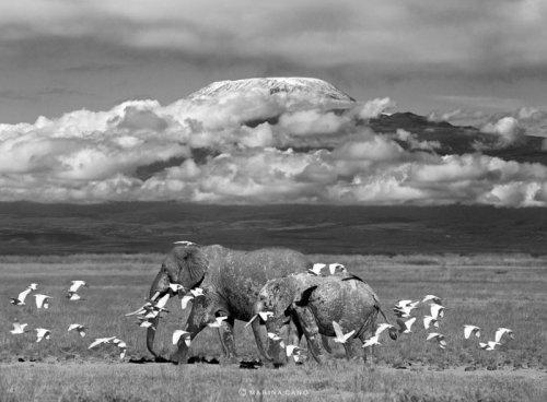 """Животные """"невиданной красы"""" на фотографиях Марины Кано (22 фото)"""