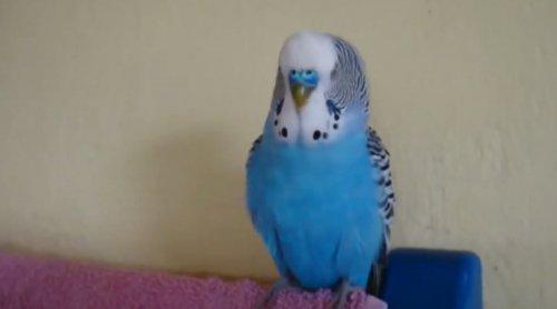 Юмор : Попугай-говорун