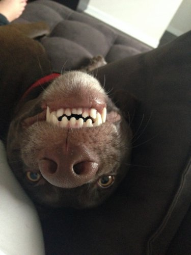 Собачий позитив (40 фото)