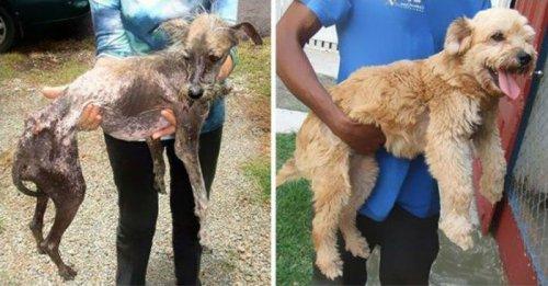 Собачки спасенные от гибели (25 фото)