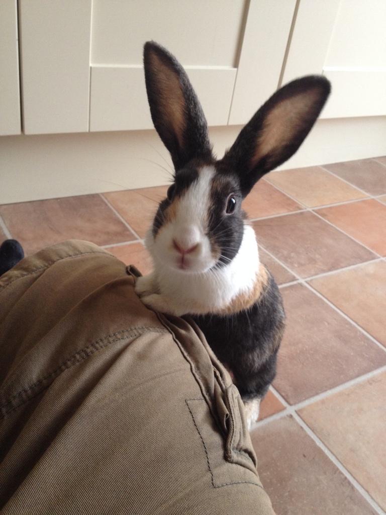 Картинки приколы про кроликов