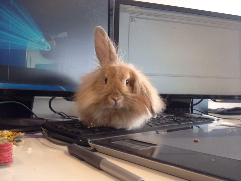генерал приколы про кроликов картинки это одна