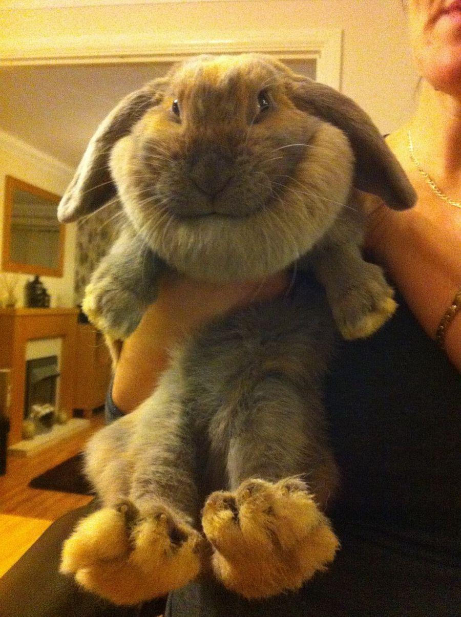 придания хорошей картинки приколов с кроликами график