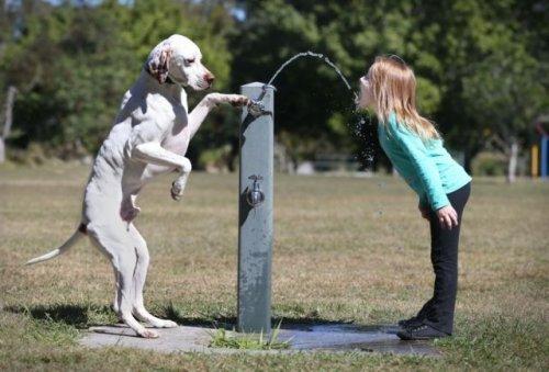 Для всех любителей собак (35 фото)