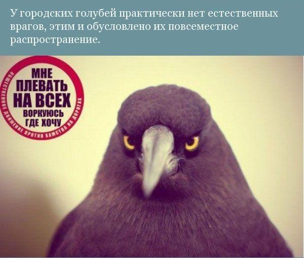 Юмор: Прикольная орнитология (9 фото)