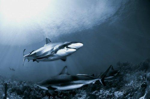 Жуткие и красивые акулы (22 фото)