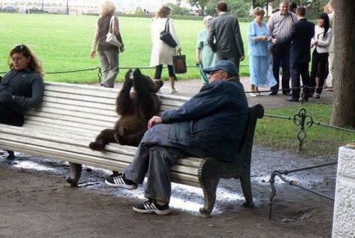 Медведи на улицах (36 фото)