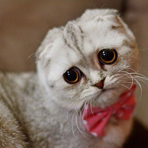 Самая грустная кошка в мире (16 фото)