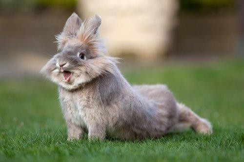 Милые и забавные кролики и крольчата (40 фото)