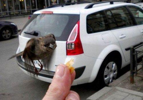 Удачные фотографии животных, сделанные в нужный момент (35 фото)