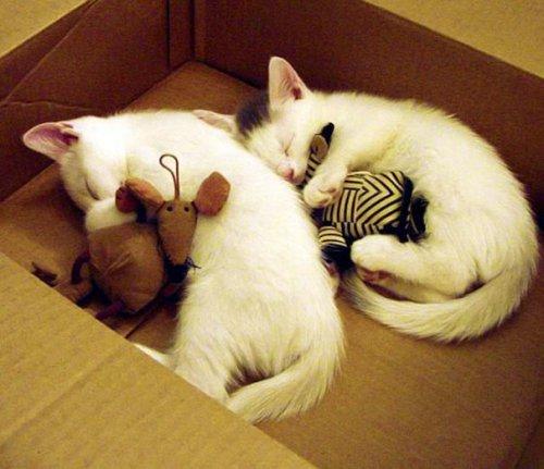 Спящие милашки (20 фото)