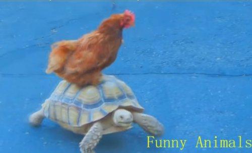 Юмор: Забавные животные