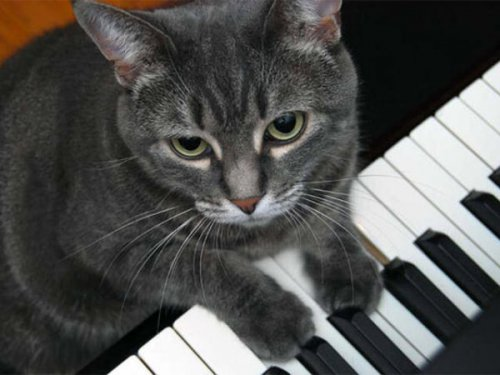 Музицирующая кошка с оркестром