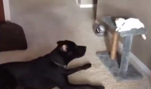 Юмор: Как подружиться с кошкой