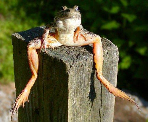 Притча: Лягушка в колее