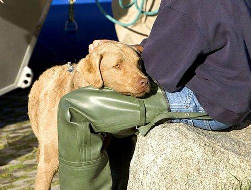 """Интересные факты о """"лучших друзьях человека"""" - собаках (9 фото)"""