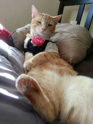 Смешные и забавные кошки (50 фото)